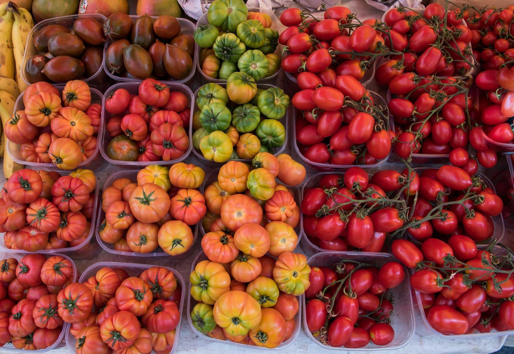 diverse varietà di pomodoro
